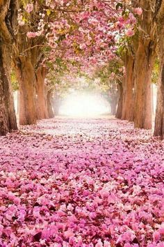 Pink blossoms...would be absolutely gorgeous to have a ceremony there!! Have white chairs facing the isle leading to an arch made out of twigs...I can see it now!!!