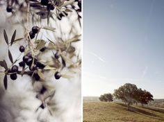 http://belleandchic.com/best-wedding-destinations-in-the-mediterranean-alentejo-portugal/