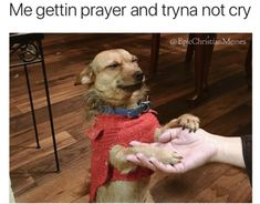 10 More Hilarious Christian Memes Circulating the Internet This Week - Project Inspired Church Memes, Church Humor, Catholic Memes, Jesus Jokes, Jesus Funny, Funny Christian Memes, Christian Humor, Funny Quotes, Funny Memes