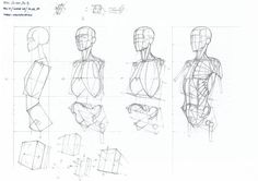 Exceptional Drawing The Human Figure Ideas. Staggering Drawing The Human Figure Ideas. Human Anatomy Drawing, Anatomy Art, Head Anatomy, Figure Drawing Tutorial, Human Figure Drawing, Drawing Tutorials, Body Reference Drawing, Anatomy Reference, Skeleton Anatomy