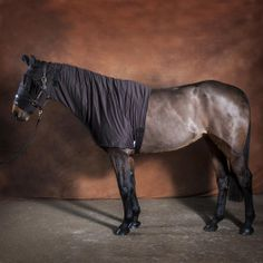 Fly Protection For Horses Anti Itch Horse Rugs From Snuggy Hoods Flyrugs