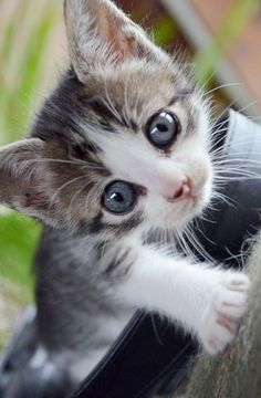 Ahh >> World's Cutest Cats And Kittens Book xxx