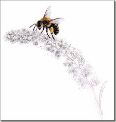Perfect and delicate.... Love it! #honeybee #drawing