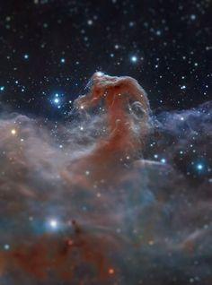 Tiny horsehead nebula
