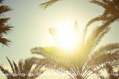 sun catcher Sun Catcher, Child, Nature, Flowers, Plants, Boys, Naturaleza, Kid, Suncatchers