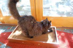 Lifetime Catscratchbox by landandseaglass on Etsy