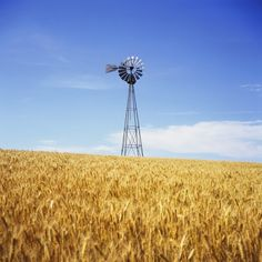 Wheatfield with Crows - Wikipedia