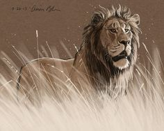 Lion In The Grass Print by Aaron Blaise