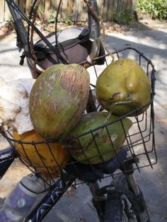 Key West Insider's Travel Tips