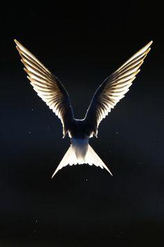 Like an Angel, Finland, by Jari Heikkinen,