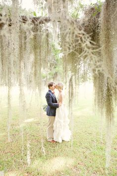 southern style, spanish moss in giant oak trees with heavy limbs reaching down to touch the earth....