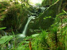 ...Creo que ambos sabíamos que los silencios del bosque son la mejor terapia, el mejor alivio para tantos achaques...