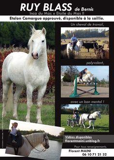 Ruy Blass de Bernis ! http://www.chevalcamargue.fr/