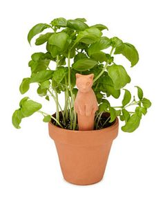 12. Weekend Plant Feeders #holiday #gifts #presents