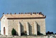 buitres sobre el tejado de la ermita de Santa Bárbara año 2002