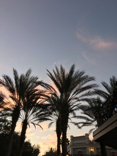 Palm Tree at sunset in Florida
