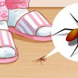Najjednoduchšia pasca na mravce do izby aj von: Stačí 1 noc a už ich nevidím v kuchyni ani na záhrade – všetky sú tam!