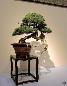 Kokufu-ten Bonsai exhibition Japan - Bonsai Empire