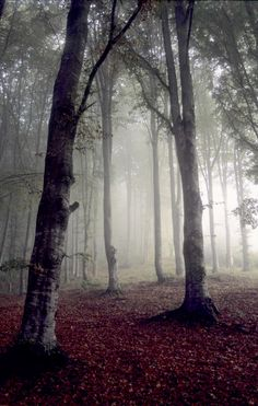 Carpathian forest, Romania www.romaniasfriends.com