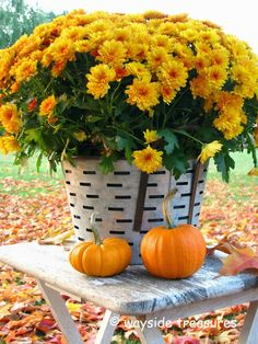 Shade Garden Flowers And Decor Ideas Gorgeous Bouquet Specialformytaste Autumn Garden, Fall Harvest, Mellow Yellow, Thanksgiving Decorations, Shade Garden, Fall Halloween, Autumn Leaves, Bouquet, Seasons
