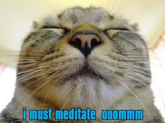 i must meditate  ooommm