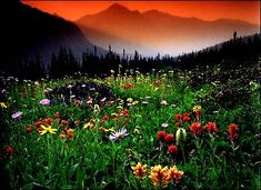 My dream is to get married in a field of wildflowers in the canadian rockies