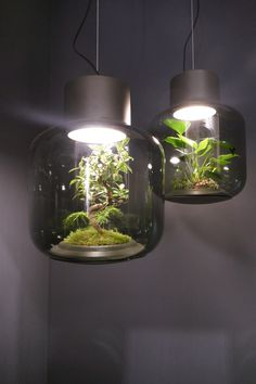 """Die Leuchte """"Mygdal"""" von Nui Studio wurde aus dem Bedürfnis nach mehr """"Grün"""" in einem städtischen Umfeld gestaltet."""