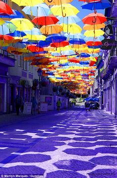 Purple rain: The street is bathed in a violet hue by the myriad of coloured umbrellas  What a bright idea! Umbrellas unfurled above Portuguese street shower colour onto people below      Umbrellas suspended across street are now a popular attraction     As well as brightening the street, they offer shade from summer sun     Idea has attracted tourists from all over the world to Agueda in Portugal