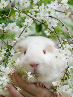 piggy in spring flowers I wish I'd had time to get pics of my girls with the cherry blossoms this year!
