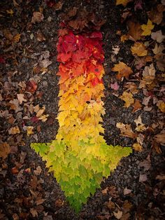 leaf arrow