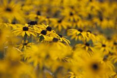 "500px / Photo ""The last flowers in autumn"" by kujaja jaja"