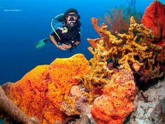 scuba diving bonaire - Google keresés
