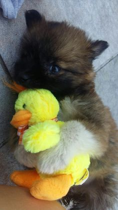 ♡ #my #dog #life #love #quiero #cool #snapchat
