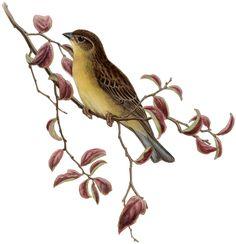 Vintage Yellow Bird Image