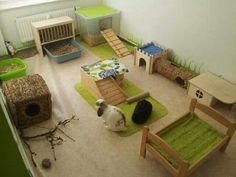 Bunny room! !