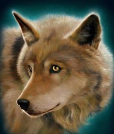 Me:Into the eyes of a wolf I stare.... Wolf: Into the eyes of a human I stare..