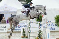 maja & red maja & red - Art Of Equitation Horse Girl, Horse Love, Grey Horses, Dressage, Equestrian Outfits, Equestrian Fashion, Equestrian Style, English Riding, Felder