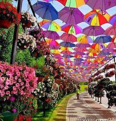 Paraguas Flotantes de Agueda Portugal #goodmorning #BuenSabado  Translated from Spanish by Microsoft Floating umbrella of Agueda Portugal VIA; Fanny       @Alamala_1