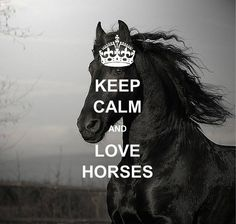 kepp calm and. Appaloosa, Friesian Horse, Keep Calm Signs, Keep Calm Quotes, Horse Love, Horse Girl, Clydesdale, Inspirational Horse Quotes, Motivational Sayings