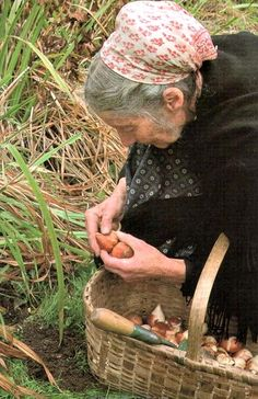 Tasha Tudor planting tulip bulbs, she planted thousands and the result was magical! Dig troughs and put them in bulk.