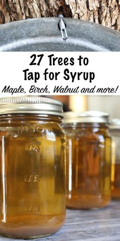 27 Trees To Tap For Syrup Maple trees are best known for their tasty syrup, but there are dozens of tree species that you can tap for syrup. Even if you don't have maple trees in your backyard, you can likely still make homemade syrup from backyard trees. Homemade Syrup, Backyard Trees, Edible Wild Plants, Wild Edibles, Survival Food, Homestead Survival, Survival Tips, Medicinal Plants, Just In Case