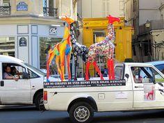 Arrivage de Girafes