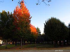 Tarde de outono no Parque Verde - Coimbra - Portugal