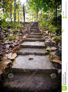 #photography #forest #staircase #stairs #nature
