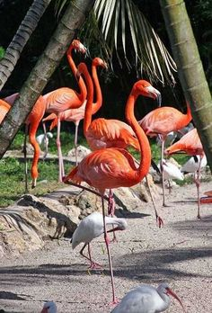 Flamingo Gardens has botanical collections and an Everglades Wildlife Sanctuary, featuring flamingos, panthers, alligators, otters and more. (Davie, Florida)