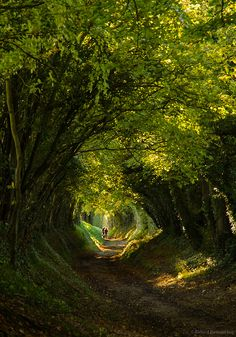 In the forest - Tree Tunnel, Halnaker, West Sussex, England photo via kawaii Beautiful World, Beautiful Places, Tree Tunnel, All Nature, Jolie Photo, Oh The Places You'll Go, Wonders Of The World, Travel Photos, Scenery