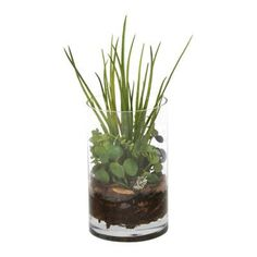 Distinctive Designs Waterlook Grass and Succulents with Orchid Bark Desk Top in Pot