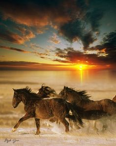 "♂ ""Horses Galloping at Sunset.""                (#animal #sunset #horses.)"
