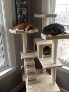 With 6 levels to perch and nap on and two cat condos, the 6 foot tall Duplex cat tree is perfect for homes with multiple cats. And at a purchase price of $99.00 delivered to your door, the Duplex provides the best bang for your buck of any cat tree on the market.