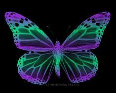 Myspace Hearts Backgrounds - , Blinking-hearts, Butterfly-purple ...